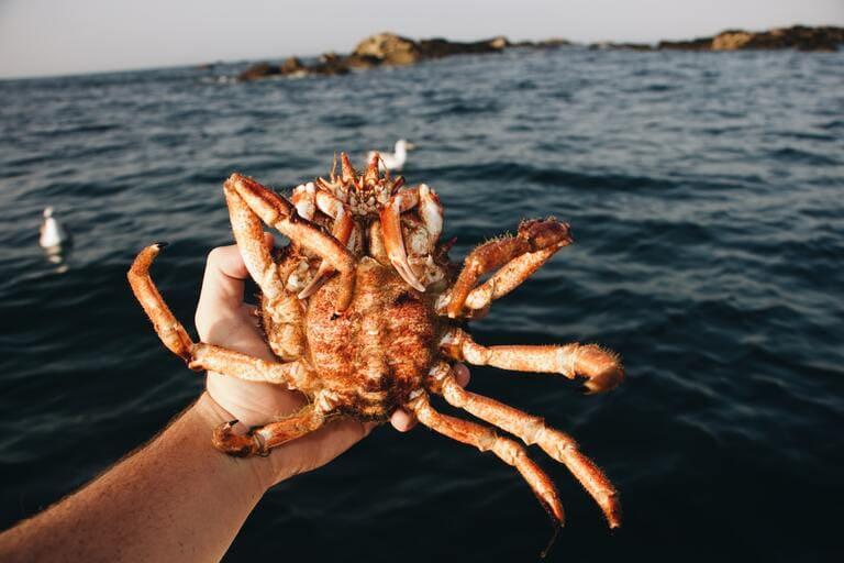 蟹も虫みたい